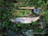 Adirondack Trout Fly-Fishing Guide Service