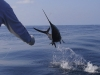Panamax Sailfishing Adventures