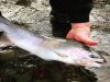 Steelhead Junkies Guide Service