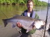 Tennessee Trophy Striper Fishing Guide