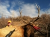 Elkhorn Outfitters