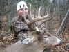 NWO Whitetail