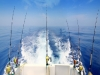 Alabama Charter  Fishing Association