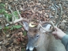 Double Drop Tine Outfitters