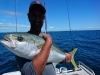 Fish and Dips Charters