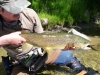 South Island Adventure Fly Fishing Ltd