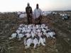 Banded Gand'r Outfitters