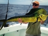 Gulf Rebel Charter Fishing