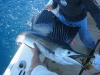 Pez Vela Fishing Charter