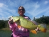 Florida Peacock Bass Fishing Guides