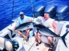 Safari Blue Charters