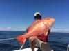 BiteBack Fishing Charters