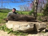 Wilderness Hunting Lodge