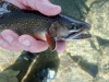 The Trout Fly & Troutfitter