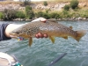 Tahoe Fly Fishing Outfitters
