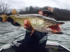 Housatonic River Outfitters