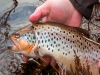 Riverwild Fishing&Lodging