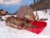 Rod's Alaskan Big Game & Wilderness Guide Services.