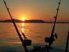 Odyssey Sport Fishing Charters