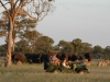 African Bush Camps and African Safaris