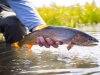 Jackson Hole Fly Fishing School